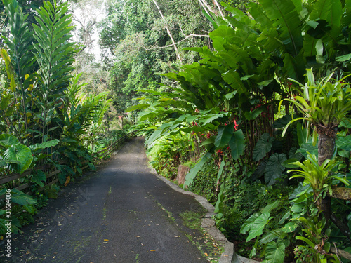 All e dans le jardin luxuriant tropical guadeloupe for Jardin tropical guadeloupe