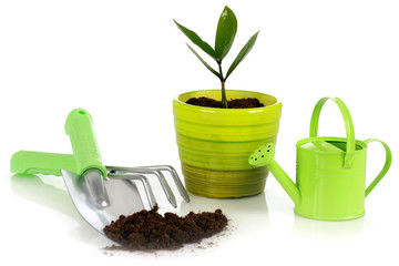 Plant with garden tools.