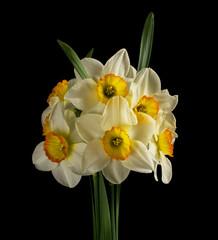 Photo sur Aluminium Narcissus on black background