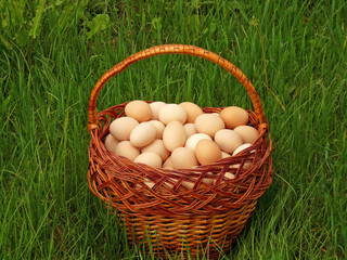 Eggs in a wicker basket on the green grass