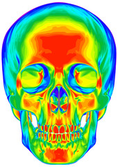 Thermal human skull - isolated on white background
