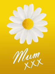 Birthday or Mother's Day card to Mum with a daisy