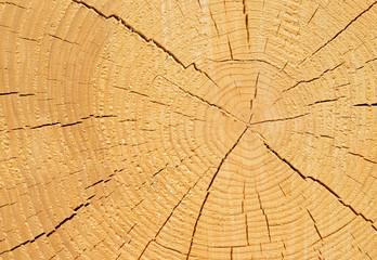 Baumstamm mit Jahresringen - Tree Trunk