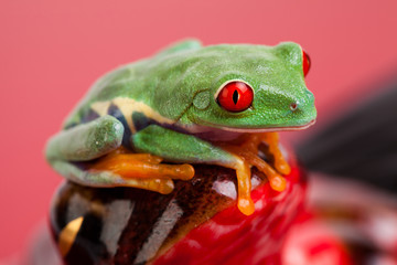 Green frog over red background