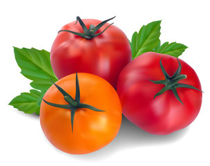three tomatoes with leaf