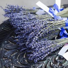 Fototapeta Bunch of scented flowers in lavender fields of French Pr obraz