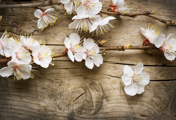 Klistermärke - Spring Blossom over wooden background