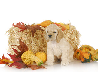 puppy in autumn setting