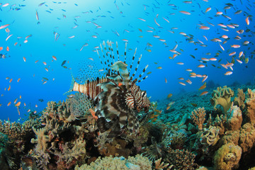 Coral Reef and Lionfish