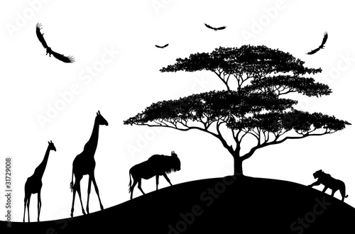 africa animals black silhouettes on a white