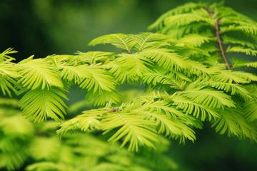 Fototapeta Zielony krzew obraz