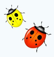 Vector ladybird