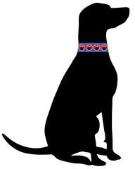 Hund Zeckenhalsband