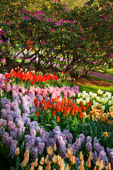 Spring flowers and rhododendron in park