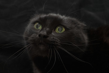 Malicious black cat on a black background