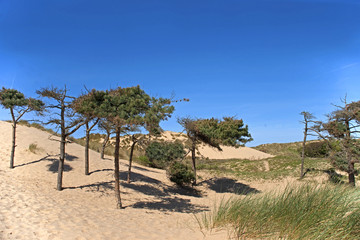 Dunes and Trees