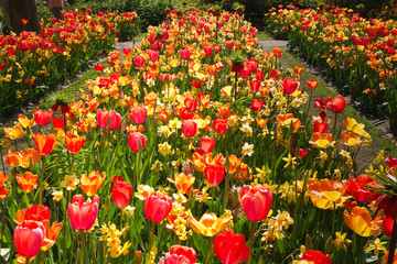 Flower-beds in garden in spring