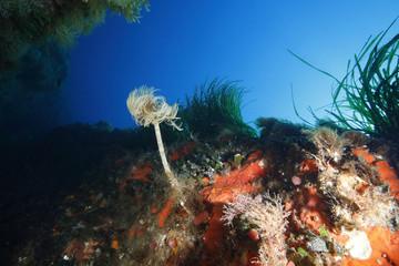 spirografo fondali pantelleria