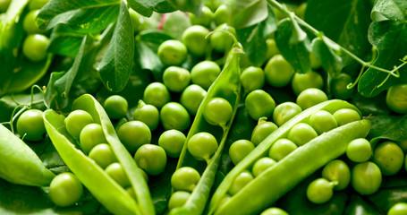 Fototapeta Green peas in the pod obraz