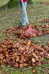 Laub harken. Blätter entfernen. Gartenarbeit im He