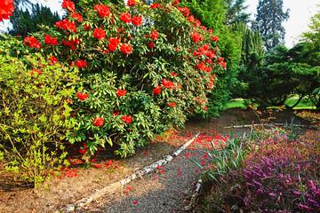 Beautiful, old park with azalea trees