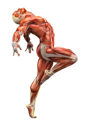 muscle man side ballet view