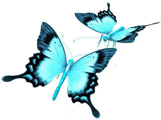 les papillons bleus