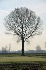 alberi 1521