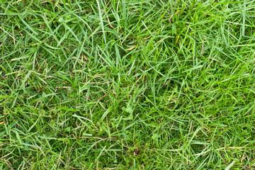 Papiers peints Herbe Green grass