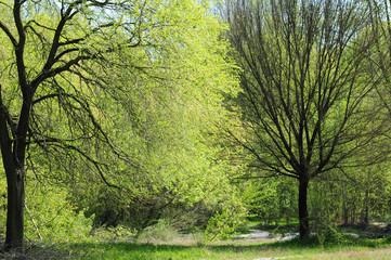 paesaggio alberi 1560