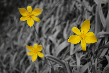 beautiful yellow flower from botanical garden