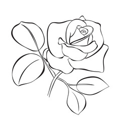 vector illustration of the beautiful rose