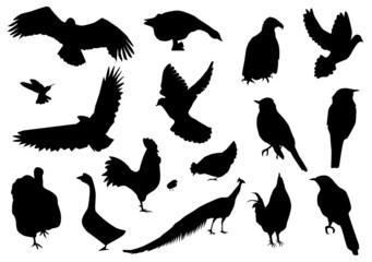 vector different birds silhouettes