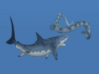 Weisser Hai und Riesenschlange