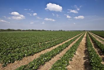 Landwirtschaft © Matthias Buehner
