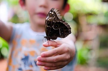 papillon sur la main