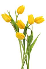Obraz Żółte tulipany na białym tle - fototapety do salonu