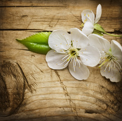 Wall Mural - Wood background with spring blossom