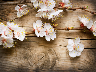 Affisch - Wood background with spring blossom