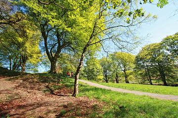 Beautiful Spring park in Scotland