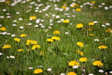flowers - Blütenmeer