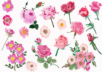 set of pink brier and rose flowers