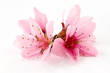 Peach pink flowers