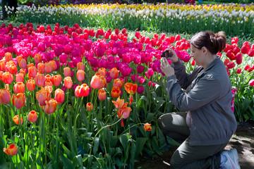 ragazza che fotografa i tulipani