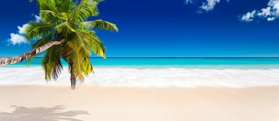 Photo sur cadre textile Palmier seychelles plage