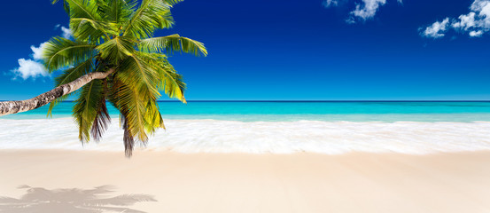 Poster de jardin Palmier seychelles plage