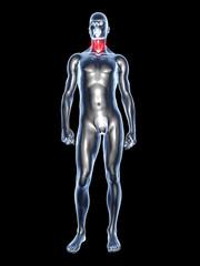 Halsschmerz - Anatomie