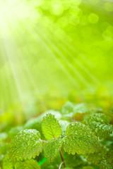 Fresh leaves on green background