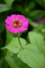 color fresh flower ,