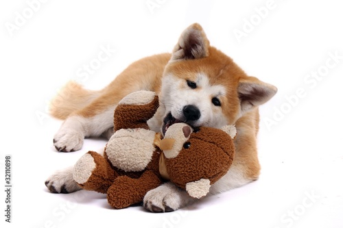 liegender akita inu welpe spielt mit teddy stockfotos und lizenzfreie bilder auf. Black Bedroom Furniture Sets. Home Design Ideas